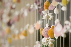 A shell festoon Stock Image