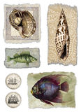 Shell & Fish Collage. Photoshop Illustration. Hand colored 19th century etchings. Can be used as one complete illustration or cropped for single spot Royalty Free Stock Photos
