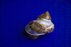 Shell with fish handmade Stock Image