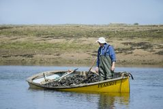 Old mussel fisherman in boat. stock image