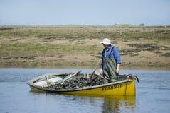 Mussel fisherman in boat. stock image