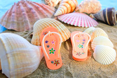 Shell and flip-flop. Stock Photo
