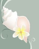 Shell with flower. A bright white conch shell with a plumeria flower on a green swirl background Stock Image
