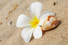Shell & flower on a beach Stock Images