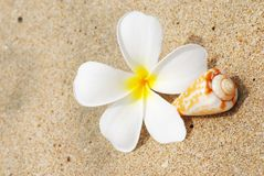 Shell & flower on a beach Stock Image