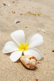 Shell & flower on a beach Royalty Free Stock Photos