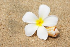 Shell & flower on a beach Stock Photos
