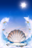 Shell For Aphrodite Royalty Free Stock Image