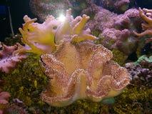 Shell formte Koralle Stockfoto