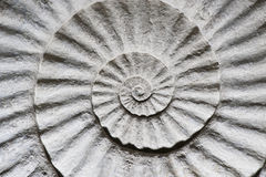 Shell fossil inside out Royalty Free Stock Photography