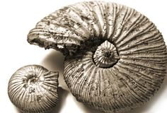 Shell (fossilized ammonite) Royalty Free Stock Photo