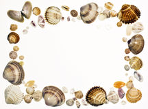 Shell frame. Frame with seashells isolated on white Stock Photos