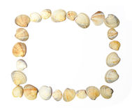Shell frame. Frame of shells isolated over white royalty free stock images