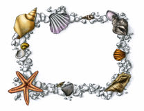Shell frame. This is a shell-decorated frame on white background. Drawn by pencil Royalty Free Stock Image