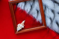 Shell in a frame with fur on a red background stock photos