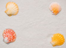 Shell frame Royalty Free Stock Images