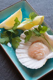 In shell fresh scallop with lemon and parsley garnish Stock Photos
