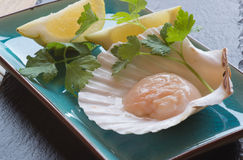 In shell fresh scallop with lemon and parsley garnish Royalty Free Stock Images