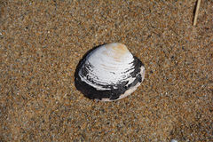 Shell game. Clam shell with the sand AS A BACKGROUND Stock Photography