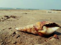 Shell-goa Strand lizenzfreies stockfoto