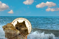 Golden dogecoin coin. Shell with a Golden dogecoin coin on the background of sea waves and the ocean. Find treasure doge. Vacation with dogecoin. Freelance doge stock images