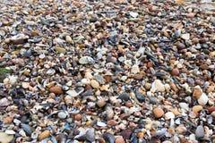 Shell gra Fotografia Stock