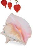 Shell grande del mar Imagenes de archivo