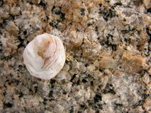 Shell on a granite rock. That makes them interesting stock images