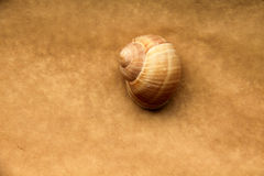 Shell of grape snail Stock Photos