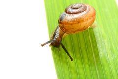 Shell on grass Stock Photo