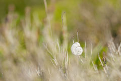 Shell in the grass Royalty Free Stock Photography