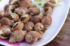 Shell grelhado (babylon manchado) Imagem de Stock