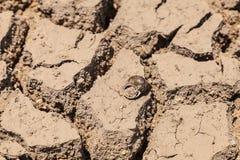 Shell on ground arid. Stock Photos