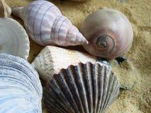 Shell Group. Shells from the North Carolina coast Royalty Free Stock Images