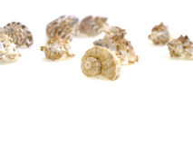 Shell group Royalty Free Stock Photo