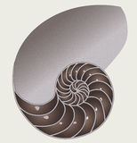 Shell half. A shell royalty free illustration