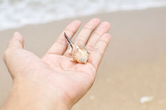 Shell in hand Stock Images