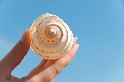 Shell in hand Stock Photos