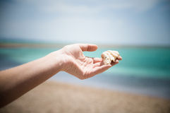 Shell in the hand. Woman`s hand is holding shell on the sea background Stock Photo
