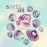 Shell hand drawn Royalty Free Stock Image