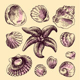 Shell hand drawn Stock Photography