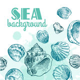 Shell hand drawn Royalty Free Stock Images