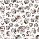 Shell hand drawn Stock Images