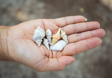 Shell on hand Royalty Free Stock Image