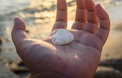 Shell on the hand with sunset light. Shell on the hand with sunset light in the evening and gold theme Stock Photos