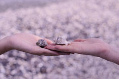 Shell in hand. Two hands holding two shells. Blurry background Stock Images