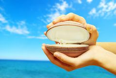 Shell in hands Stock Images