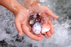 Shell in hands Royalty Free Stock Images
