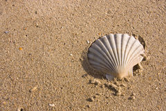 Shell Harbour. Shell Sits Washed Up On A Shoreline At An Idyllic Beach Location [Room For Text Stock Photography