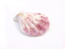 Shell hermoso del mar Fotos de archivo